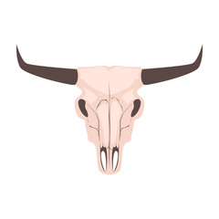 Longhorn cow skull head vector illustration. Isolated on white animal cranium. Bull head with long horns.