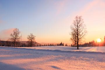 Fototapete - Winterlandschaft Schwarzwald