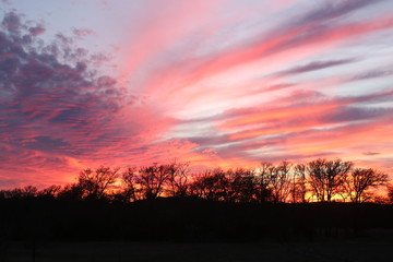 Sunset in Texas with trees and pink sky