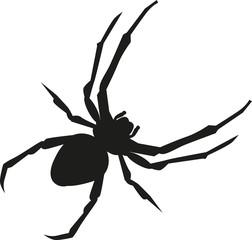 Spider realistic silhouette
