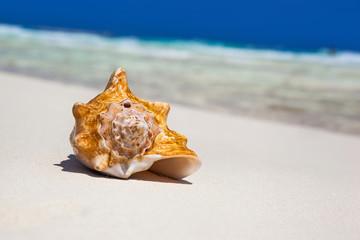 Sea shell on beach, close up