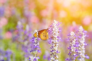 Beautiful butterfly on a flower in a flower garden.