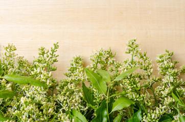 Tender medical neem leaves and flower