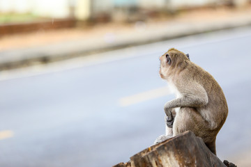 Cute monkeys waiting something near the road.