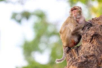 Cute monkeys on the tree.