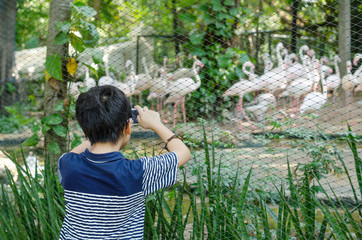 Asian boy taking photo of animals in zoo by smartphone