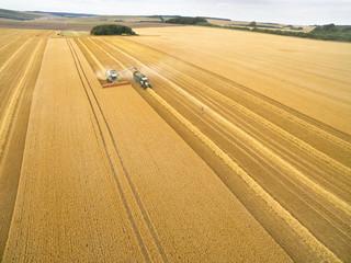 Aerial view of combine harvester filling trailer in golden barley field