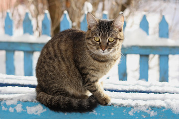 Cat on the snow-covered bench.