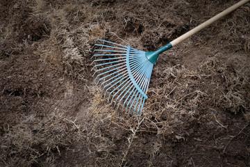 yard work, preparation soil in garden with rake