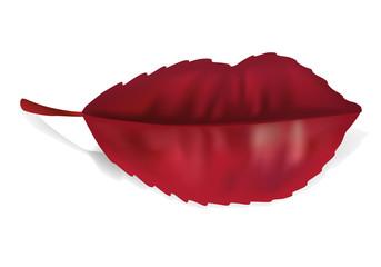 Lèvres - Feuille rouge