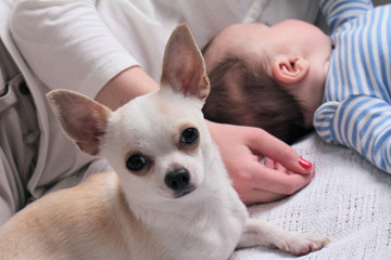 Mother , baby and chihuahua dog on bed. Baby and pet at home. Growing up with a pet concept