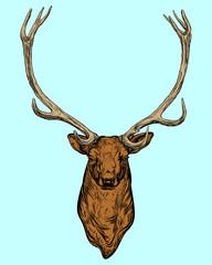 Picture horned deer .