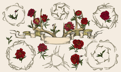 Antlers and peonies entwined ribbon.