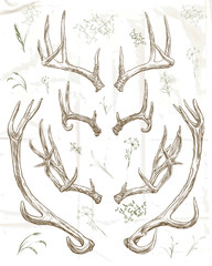 Hand drawing deer horns