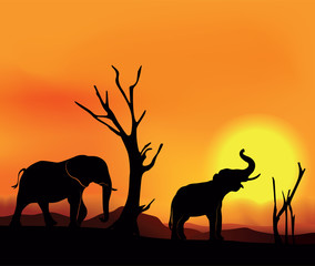 African landscape sunset with elephants