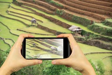 Taking photo on smart phone. Most Beautiful Rice Terrace in Sapa