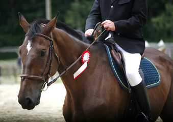 Dressage horse galloping with her proud rider