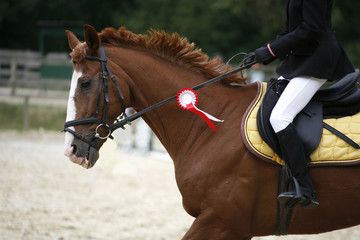 Dressage horse canter with winner ribbon