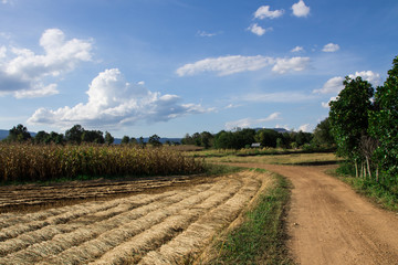 Farm and road