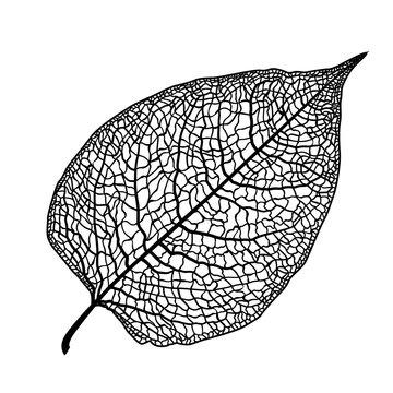 manually drawn leaf skeleton