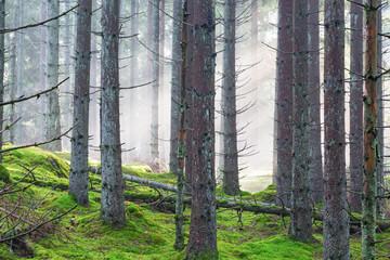 Keuken foto achterwand Bos in mist Fog in a forest