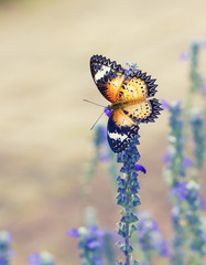 Beautiful butterfly on a flower in a flower garden.