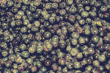 Fresh Blueberries Macro Retro