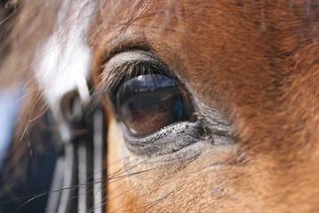 Fotobehang Paarden Pferde Auge