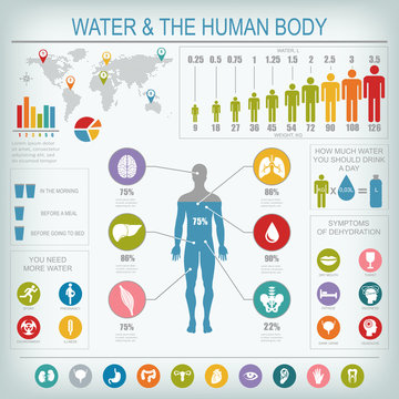 Water and human body infographic