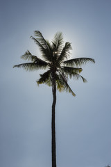 The Sun Behind The Coconut Tree with Sky Background