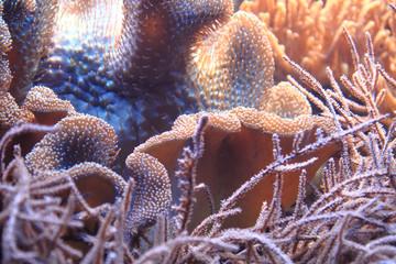 coral sea background