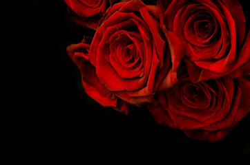 Beautiful red roses on black background