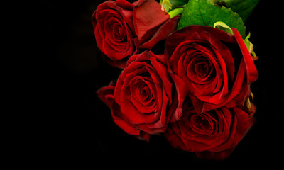 Beautiful red roses and pearls on black background