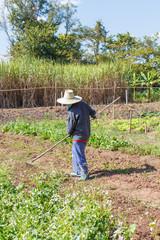 Farmer gardener holding a rake