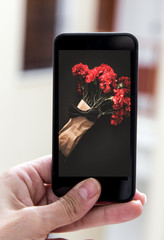 Hand holding smartphone with image of bouquet of red carnations