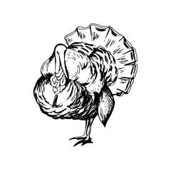 Hand drawn black and white turkey
