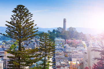 Fototapete - Coit Tower behind fir tree over the San Francisco