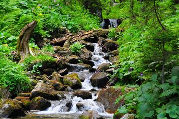 pure mountain stream
