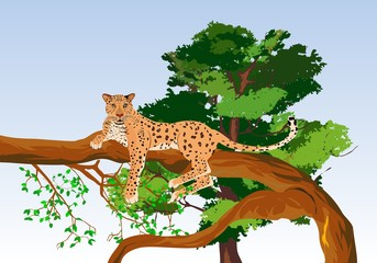 Wild leopard lying on tree, vector illustration.