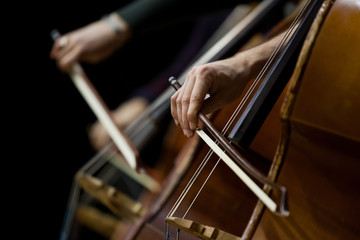 Detail basses in a symphony orchestra