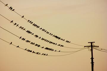Birds sitting on wire