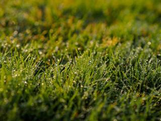 fresh morning water dew on green grass