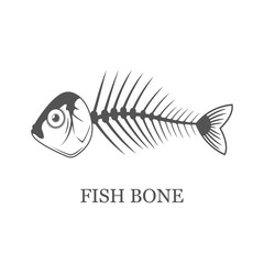 Fish bone, fish skeleton vector grey illustration isolated