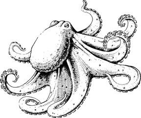 Octopus. EPS 10, AI, JPEG