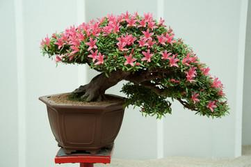Bonsai presso Euroflora