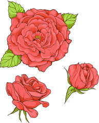 set of 3 isolated red roses