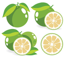 White grapefruits vector illustrations