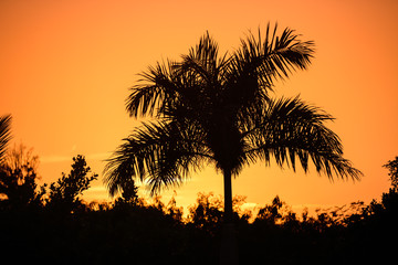 Tropical palm tree silhouette on the background of a beautiful s