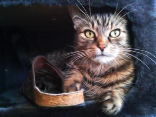 Gemälde: Katze in Kratzbaum