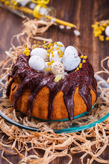 Easter cake with chocolate decorated with colored quail eggs and Mimosa.selective focus.